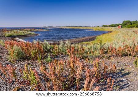 Swedish summer landscape with typical sea coast plants - stock photo