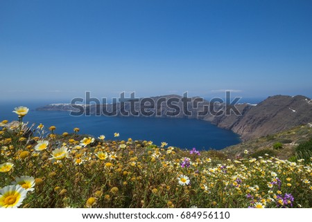Sweeping Greek landscape featuring the caldera of Santorini island in Greece with wildflowers in the foreground.