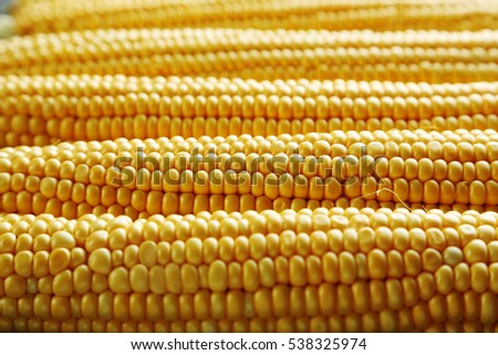 Sweet and ripe corns background