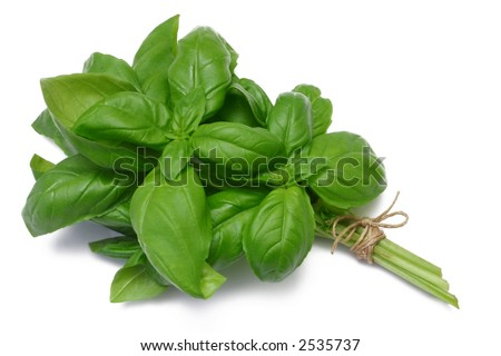 Sweet Basil (herb) tied in a bunch with twine, isolated on white - stock photo