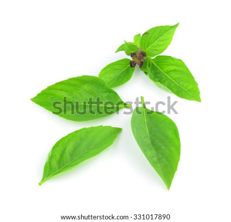 Sweet Basil isolated on white background.