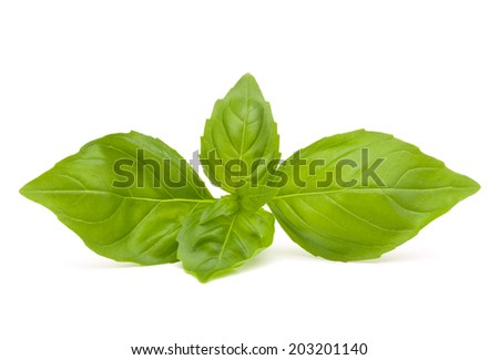Sweet basil leaves isolated on white background