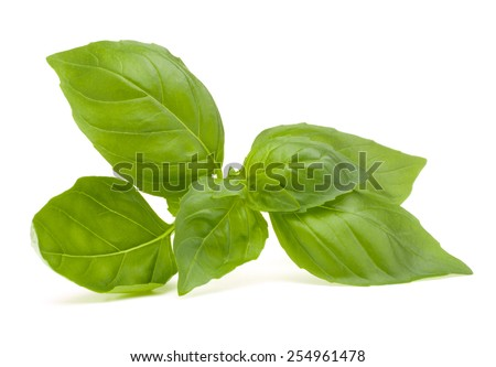 Sweet basil leaves isolated on white background - stock photo