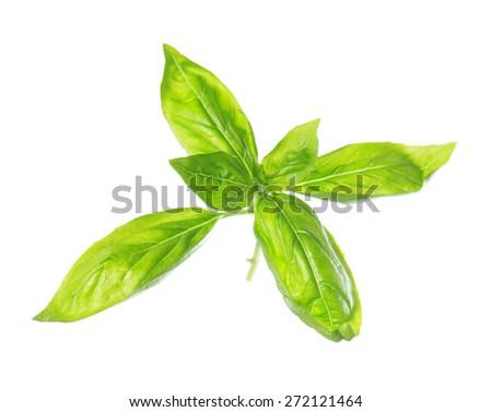 Sweet basil leaves isolated on white background. - stock photo