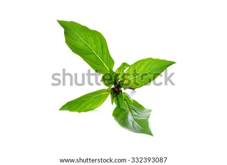 sweet basil leaves with stem on white background