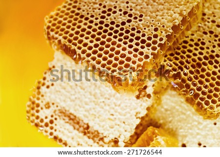 Sweet beautifu goldenl honeycomb with honey - stock photo