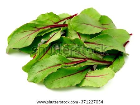Sweet beet leafs(mangold) on white - stock photo