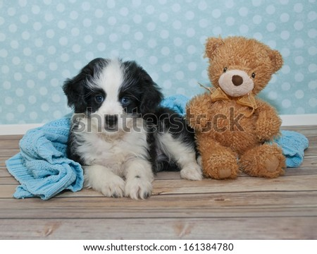 Sweet black and white puppy laying in a boys bedroom scene with a cute teddy bear. - stock photo