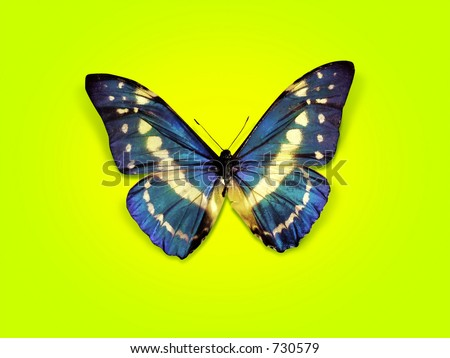 sweet butterfly in the air - stock photo