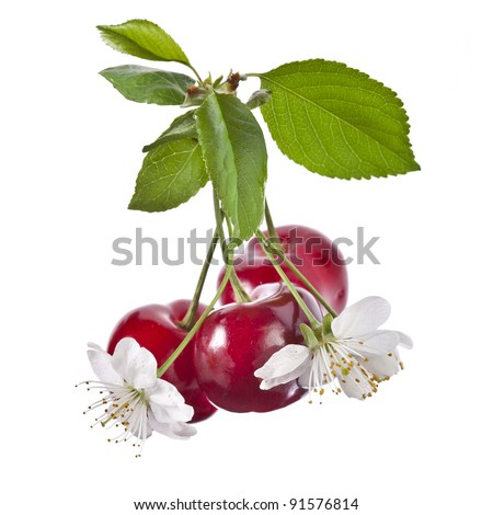 sweet cherries  isolated on white background - stock photo
