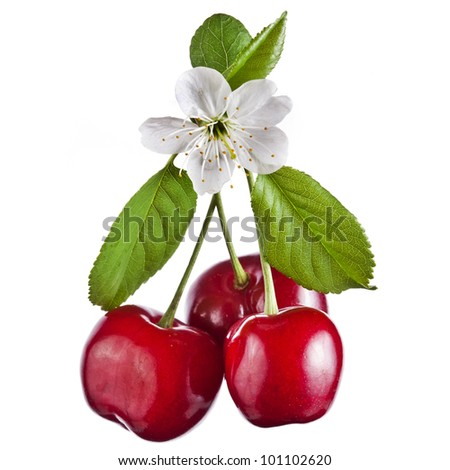 sweet cherry isolated on white - stock photo