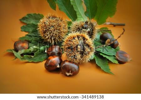 sweet chestnut fruit with green leaf on orange background - stock photo