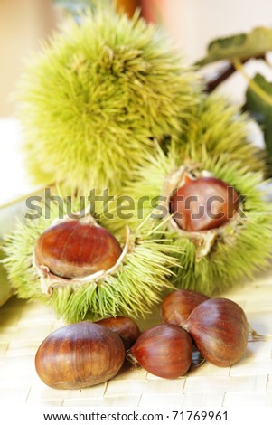 Sweet chestnuts on the branch - stock photo