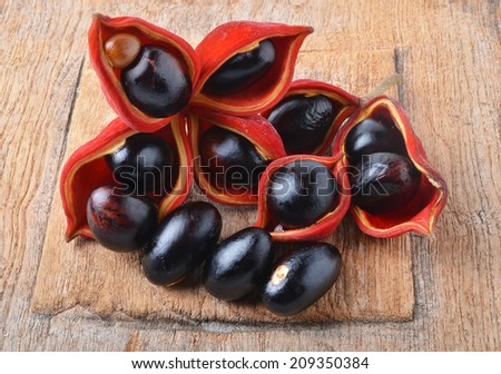 sweet chestnuts (Sterculia monosperma) - stock photo