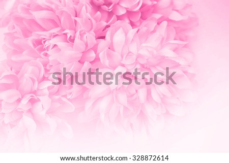 Sweet color beautiful flowers in soft style for background - stock photo