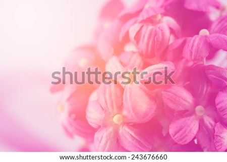 Sweet color flower make of mulberry paper in soft style for background - stock photo