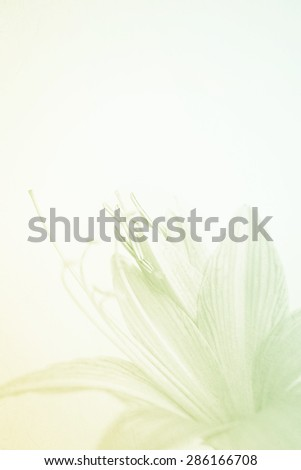 sweet color flower petals in soft color and blur style on mulberry paper texture for background - stock photo