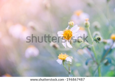 sweet color flowers in soft style for background