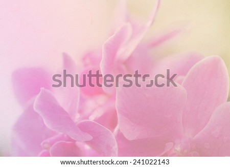 sweet color orchids in soft style for background