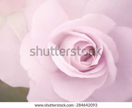 sweet color rose in soft color and blur style for background.
