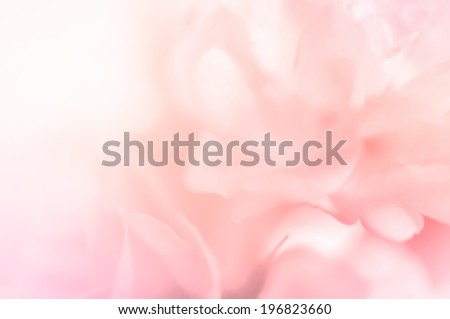 sweet color roses in blur style for background - stock photo