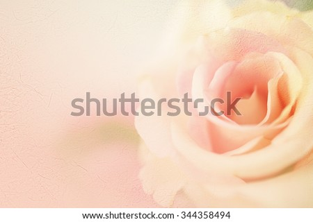 sweet color roses in soft color for flora background
