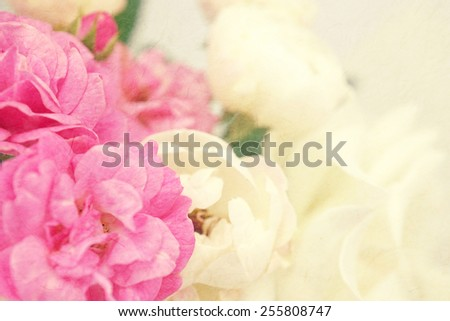 sweet color roses on mulberry paper texture for background