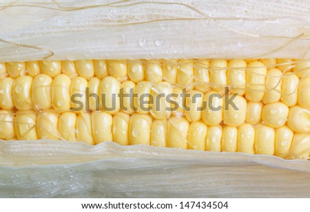 Sweet corn closeup with water drops