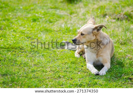 Sweet cute puppy dog sitting on the fresh green grass on a sunny spring day with a vibrant colorful look and text space on the left