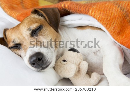 Sweet dreams with little toy friend - stock photo