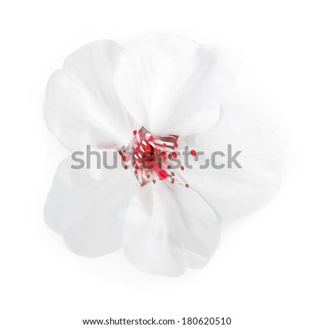 sweet flower on white isolated background
