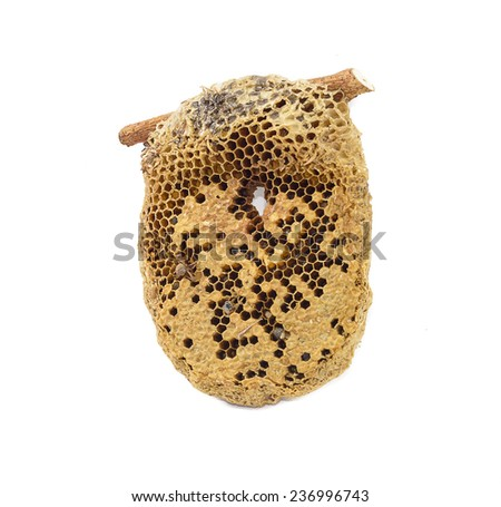 sweet Honeycomb natural isolate on white background