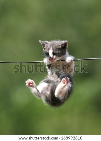 Sweet kitten hanging on a wash-line - stock photo