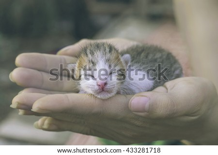 Sweet Kitten taking a nap, cute kitten sleeping in the pet carrier on the hand vintage toning