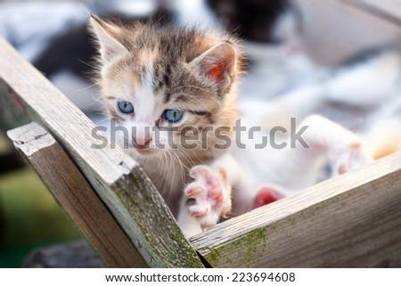 Sweet little kitty - stock photo