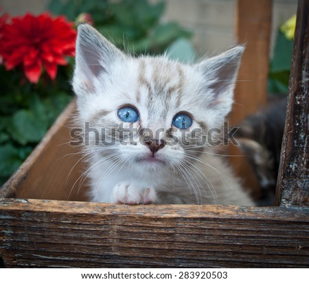 Sweet little Siamese kitten sitting in a basket with flowers around her.