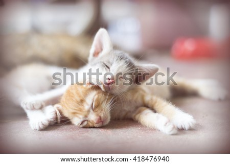 Sweet moment A group of different kitten sleeping on the floor.In soften and selective focus. - stock photo