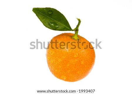 sweet orange fruits. calamondins
