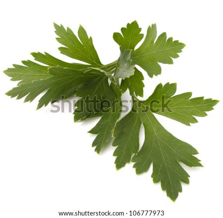 Sweet parsley leaves isolated on white background cutout