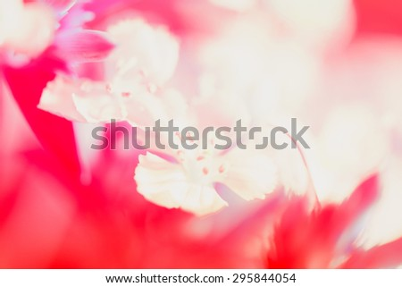 Sweet pastel color petal white flower in soft color and blur style for background - stock photo