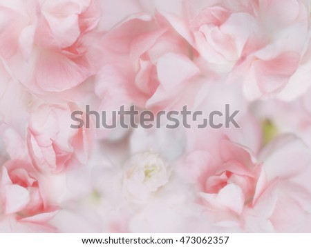 sweet pastel flowers with soft dreamy style for floral background