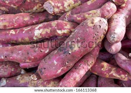 Sweet Potato. - stock photo