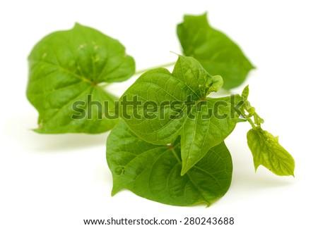 sweet potato leaves isolated on the white background - stock photo