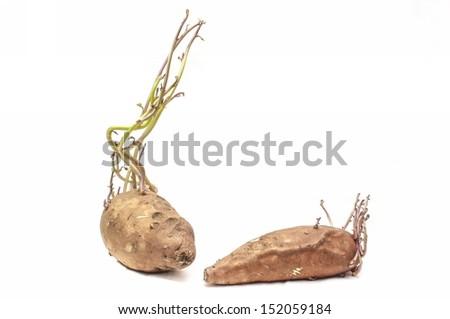Sweet potato with seedlings on white background - stock photo