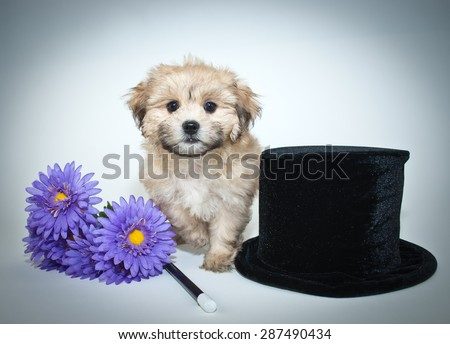 Sweet puppy sitting with a top hat, flowers and a magic wand on a white background.