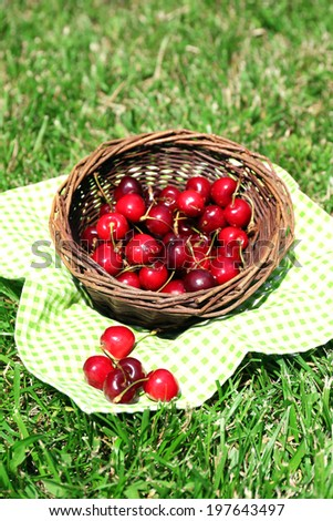 Sweet ripe cherries in wicker basket, on green grass background