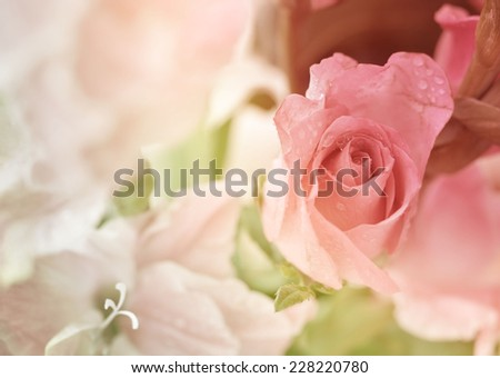 sweet rose flowers made with color filters - stock photo