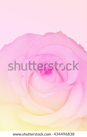 Sweet rose in soft color and blur style for background