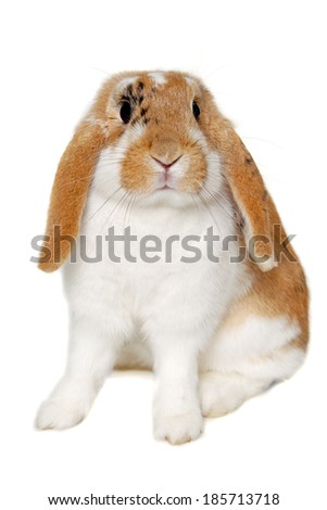 Sweet sad rabbit is sitting on a white background
