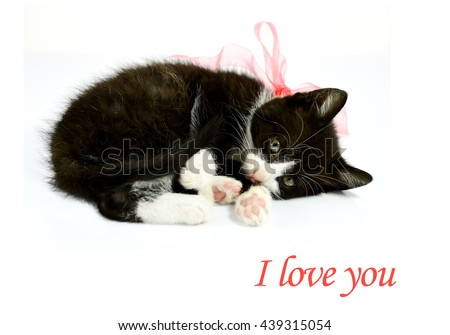 Sweet tabby kitten sleeping with a pink bow on white background, gift, I love you card concept